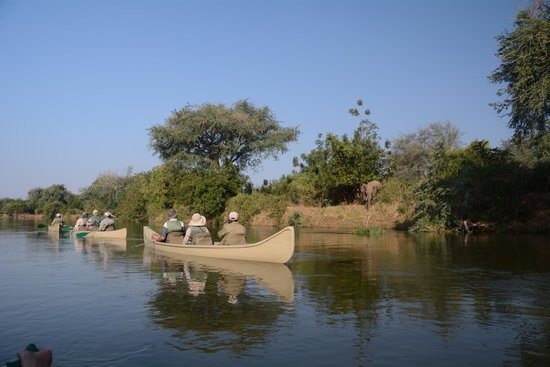 Old Mondoro Bush Camp : Elephant on banks of Zambesi