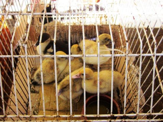 Mercado do Bolhão: Grow your own chicken soup ...