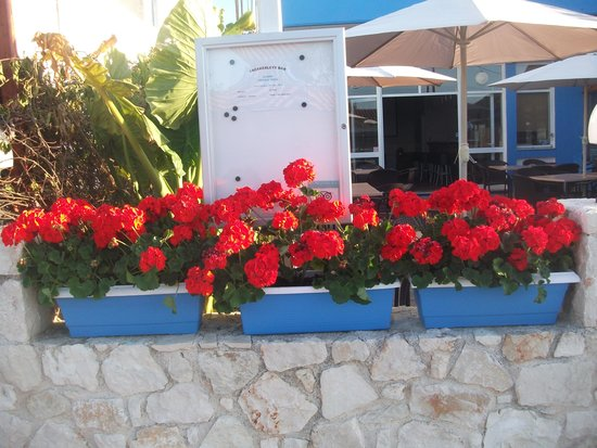 Geraniums as you are in Gerani