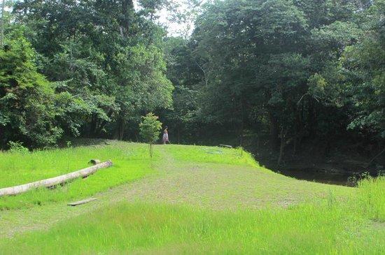 Amazon Eco Tours & Lodge: Vista desde el lodge al rio.