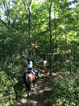 Niagara Riding Stables : Beautiful trail through the woods!