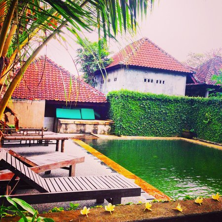 Dewa Bungalows : Pool