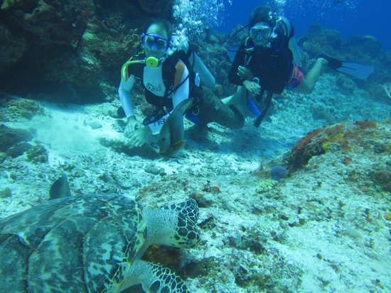 Eco Divers : Hawksbill turtle