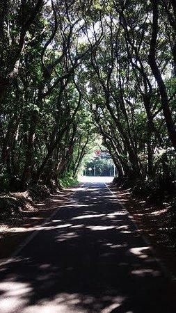 Shiono Cape Lighthouse : トンネル