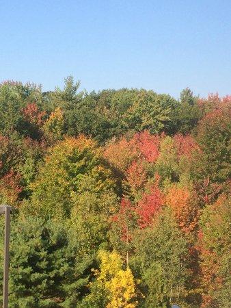 Hampton Inn Saco / Biddeford : Nice to see start of Fall