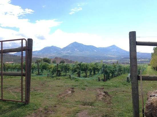 Paonia, CO: View of ther vineyard and nearby mountains.