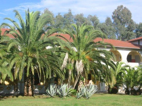 Attika Beach Hotel: zahrada