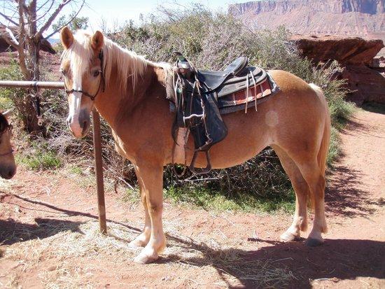 1d89a4a7b9834 Gem, a Haflinger horse - Picture of Moab Horses, Moab - TripAdvisor