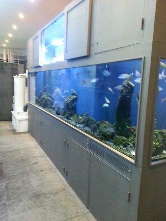Porto Pim Aquarium: Foto de um dos tanques.