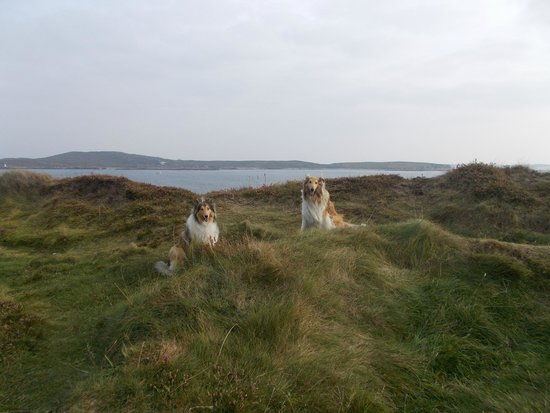 Dogs of Rockmount House on a Photo Shoot