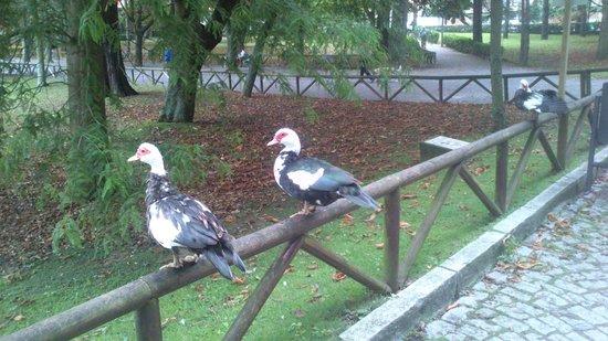 Parador de Gijón: parque