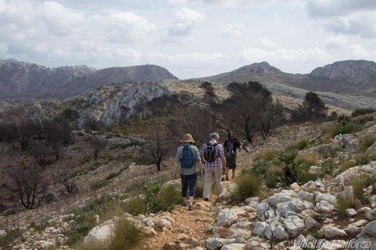 Wildlife Mallorca: Wild Mallorca