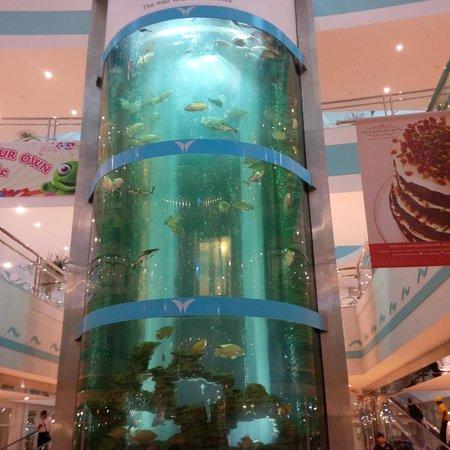 Mushrif Mall: Fish tank when you enter