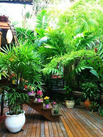 Pousada Riacho dos Cambucas : Garden