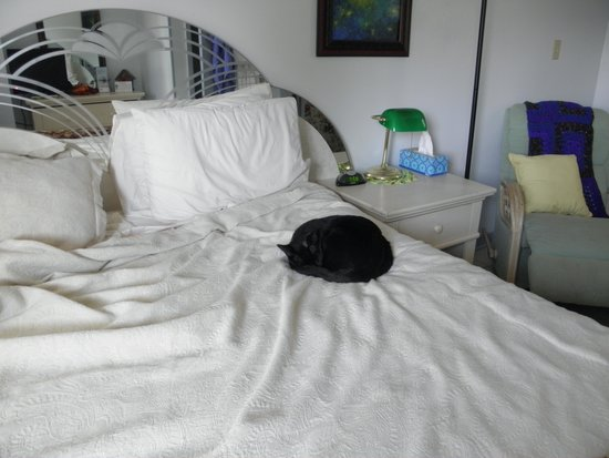 La Paloma Hot Springs & Spa: room #4 with cat