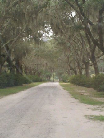 Bonaventure Cemetery: One of the many roads used to explore Bonaventure Cemetary.