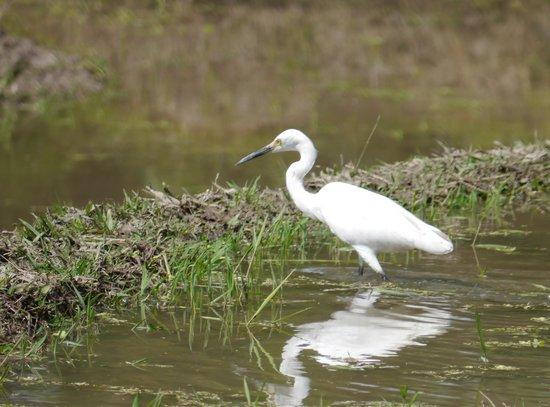 Biyukukung Suites and Spa : Egret, seen from room