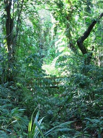Carambola Botanical Gardens & Trails: Carambola botanical garden