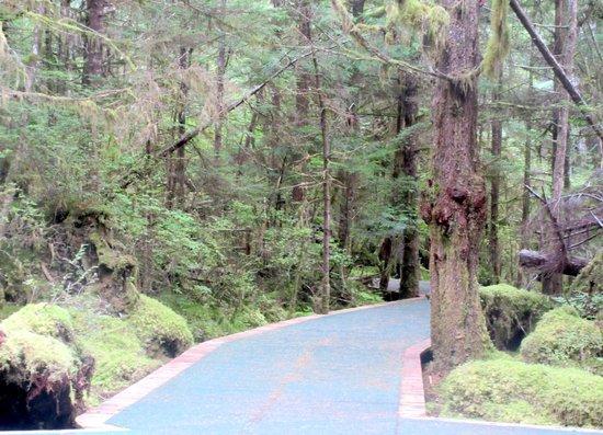 Silverking Lodge: Nice Walk Way Through The Rain Forest at Silver King Lodge, Ketchikan, Alaska