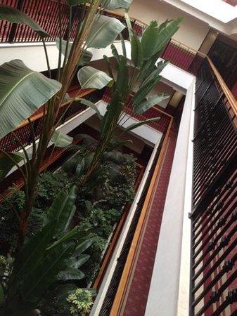 TUI BLUE Falesia: interno con piante tropicali