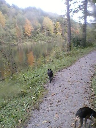 South Holston Dam: walking trail