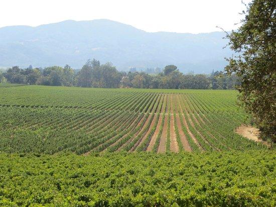 Intimate Wine Tours : vineyard