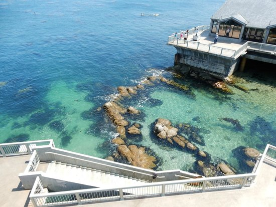 Monterey Bay Aquarium: Outdoor Area, Tide Pool