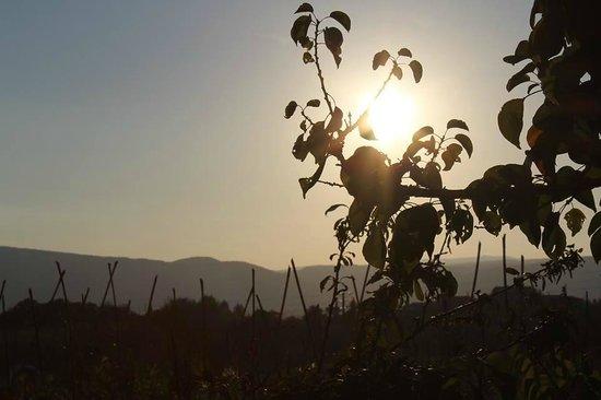 View from the Tenuta la Santissima