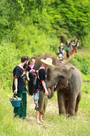 Happy Elephant Home