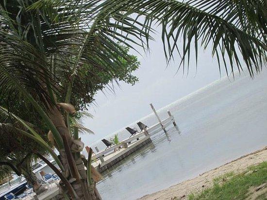 "Iguana Reef Inn: The ""backyard"" of the hotel"