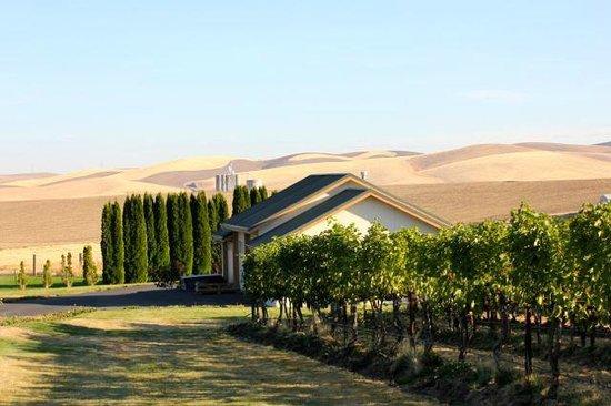 Walla Faces Inns at the Vineyard: Faces at the Vineyard:View from Porch