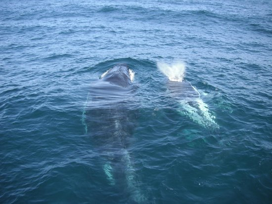 Dolphin Watch Cruises: whales that came under the boat