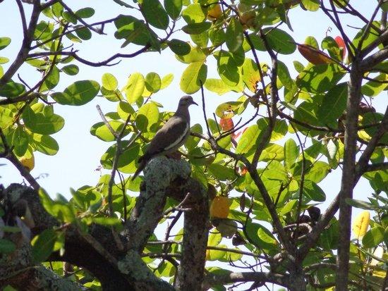 Provincia di Alajuela, Costa Rica: Bird photographed at Norma's Villas in La Garita, Costa Rica