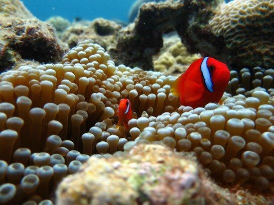 Okinawa Diving 20