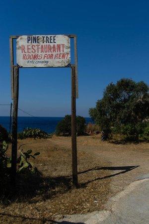 Pine Tree: entrée
