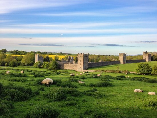 Kells Priory: Gorgeous scene with the sheep in front, and yellow rapeseed fields behind!