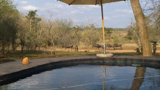 Mvuradona Safari Lodge: Pool