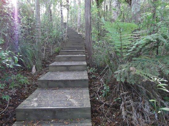Alice Eaves Scenic Reserve: Steps