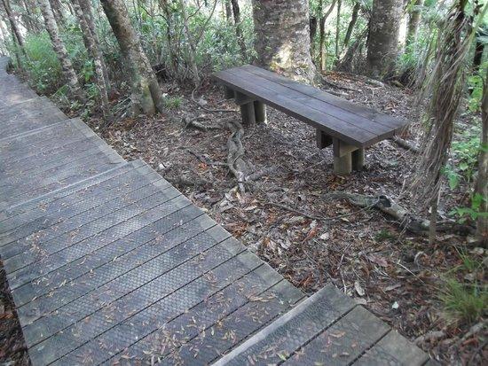 Alice Eaves Scenic Reserve: Bench