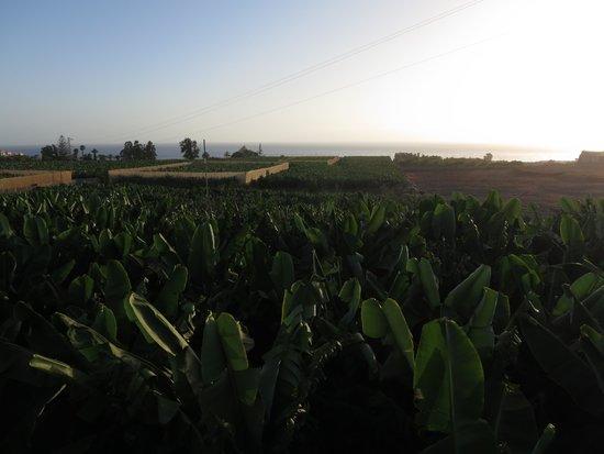 Hotel Rural El Navio: View of Banana Plantation