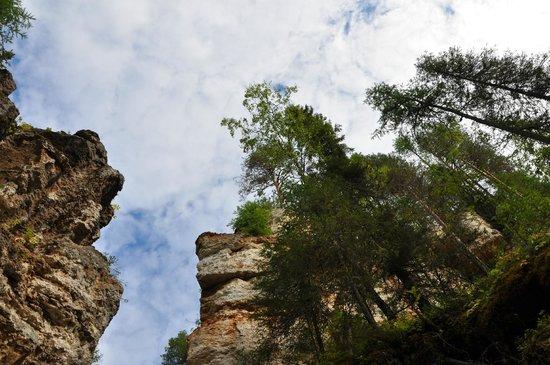 Pinezhsky Nature Reserve