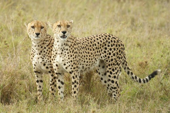 Wildersun Safaris & Tours Tanzania