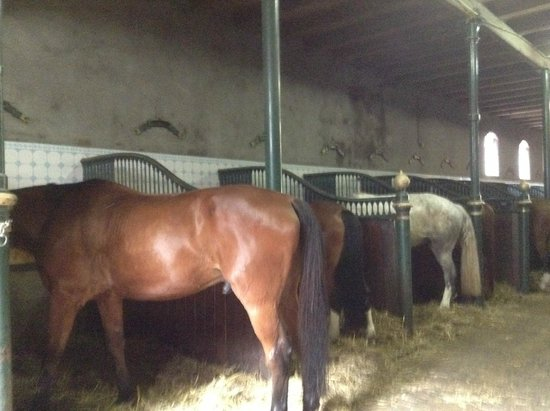 Levend Paardenmuseum De Hollandsche Manege: Stalls