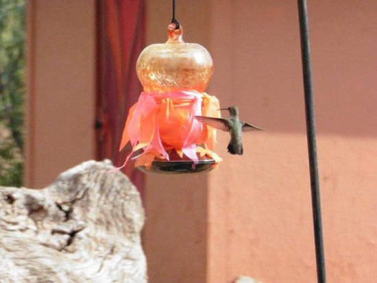 Firetree Bed & Breakfast : Er vliegen allemaal kolibri's