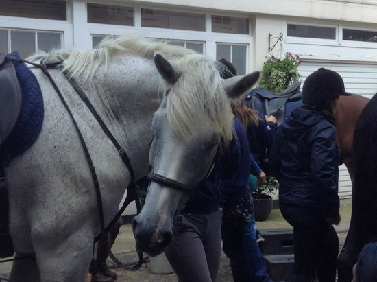 Hyde Park Stables : Billy