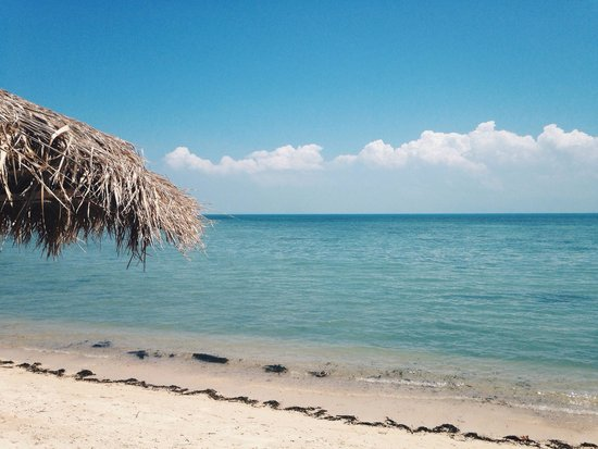 The Blue Parrot Beach Resort : Beach right on your doorstep