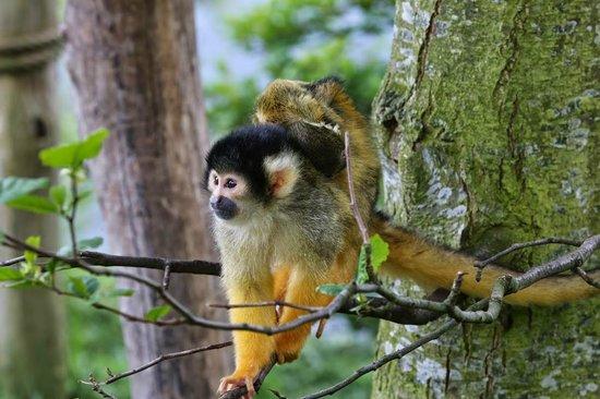 Ree Park Safari: Сафари-парк Рее