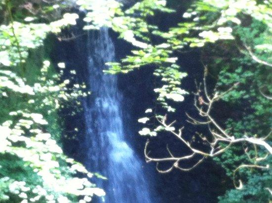 Falling Foss Tea Garden and Waterfall : Waterfall at Falling Foss
