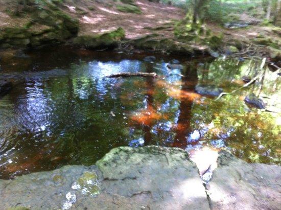 Falling Foss Tea Garden and Waterfall : To Falling Foss Tea Gardens from Maybeck