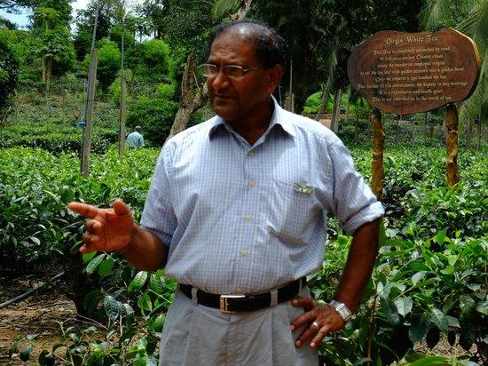 Handunugoda Tea Estate: An informative tour